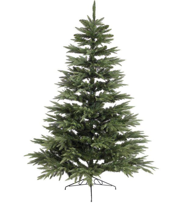 Colorado Pine Tree