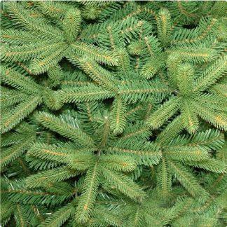 Heritage Spruce Deluxe Pe Christmas Tree