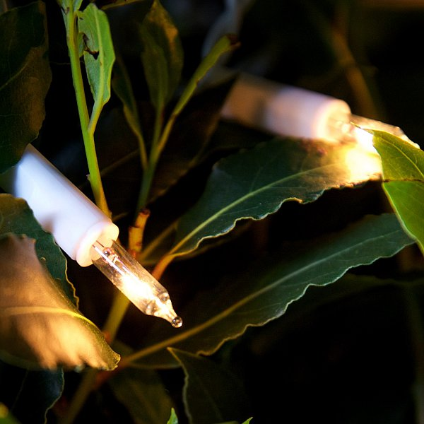 Traditional Fairy Lights - Filament Bulbs