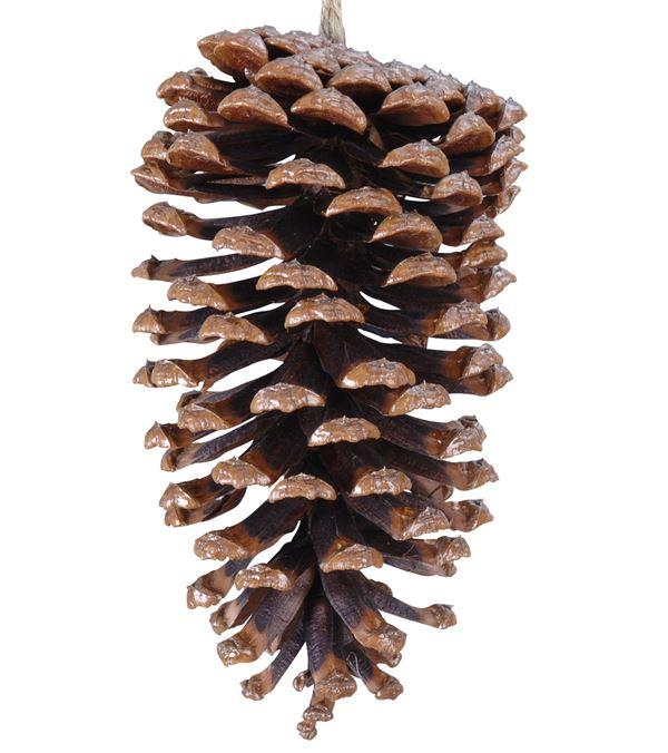 Large Pine Cones - 14cm x 7cm - Brown - Pack of 12