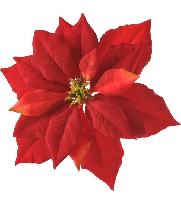 Poinsettia with Clip - 24cm Diameter - Pack of 8 - Red